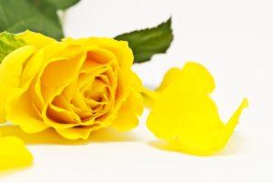義父にお花