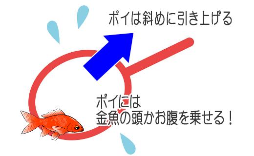 金魚のすくい方