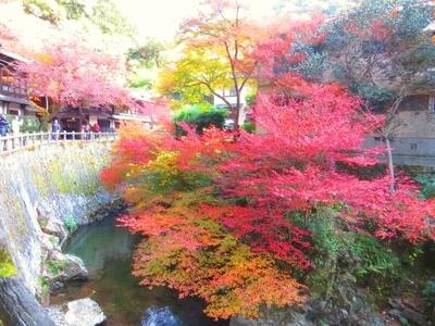 箕面の紅葉(箕面川)