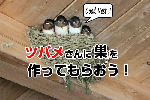 つばめの巣を作る